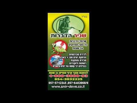 לוכד עכברים בתל אביב,054-3032225,לוכד עכברים,הרחקת יונים בתל אביב יפו,כיני יונים,מסתור כביסה. .