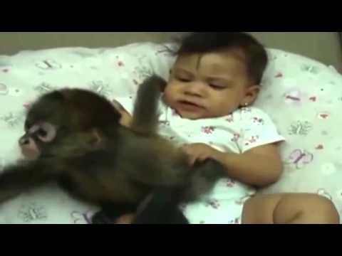 обезьянки смешные видео в ютубе