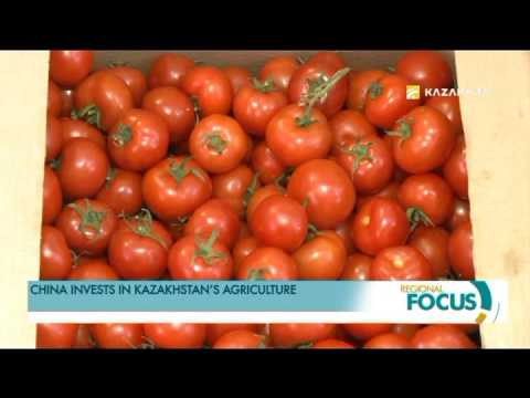 China invests in Kazakhstan's agriculture