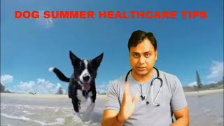 Dog Summer Care Tips!!