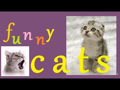 Funny Cats Europe Compilation 9 - February  2018  Best Cat Videos * Make Your Day Happy DCV