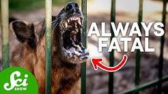 Top 5 Deadliest Diseases