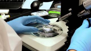 Zebrafish Microinjection Video - Full Version