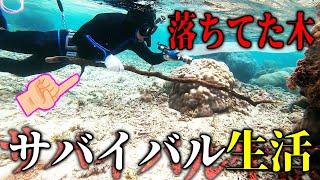 プロの魚突き師なら落ちてた棒で魚を突けるのか【素潜りサバイバル #6話】