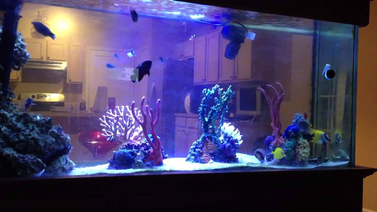 Fish for marine aquarium - Fish Only Saltwater Tank Under Led Lighting With Coral Inserts Youtube