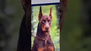 10 อันดับน้องหมาที่ฉาดที่สุดในโลก 2/3