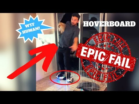 CRAZY HOVERBOARD FAIL WITH POMERANIAN!