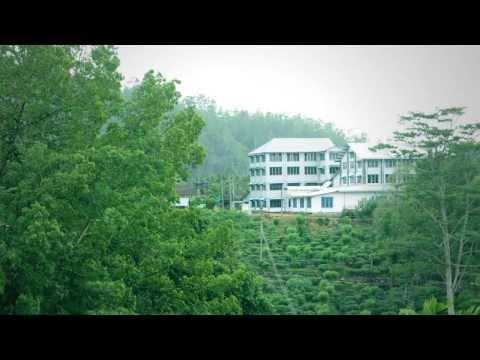 Dilmah Tea Estate - Moragalla