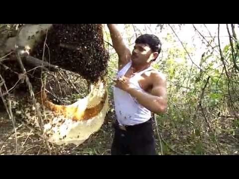 Madhumakhi ke chatte se honey ese nikalte hai !funny video