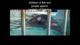 Bali - Circus Dolphin Protest