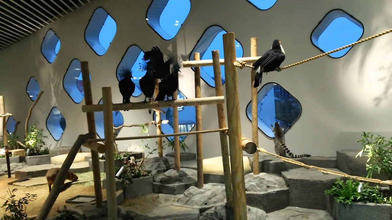 NIFREL(ニフレル)猿鳥イルカEXPOCITY - YouTube