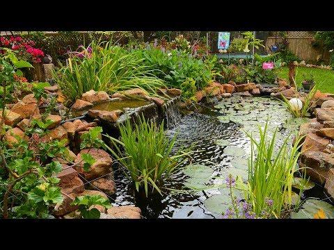 Garden Paradise In Cedar Park |Deborah & Robert Jennings |Central Texas Gardener
