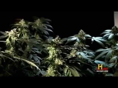 Marijuana  A Chronic History Full Length Documentary