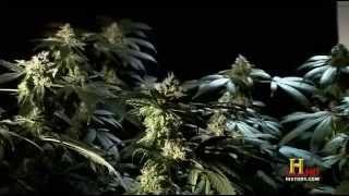 Marijuana - A Chronic History (Full Length Documentary)