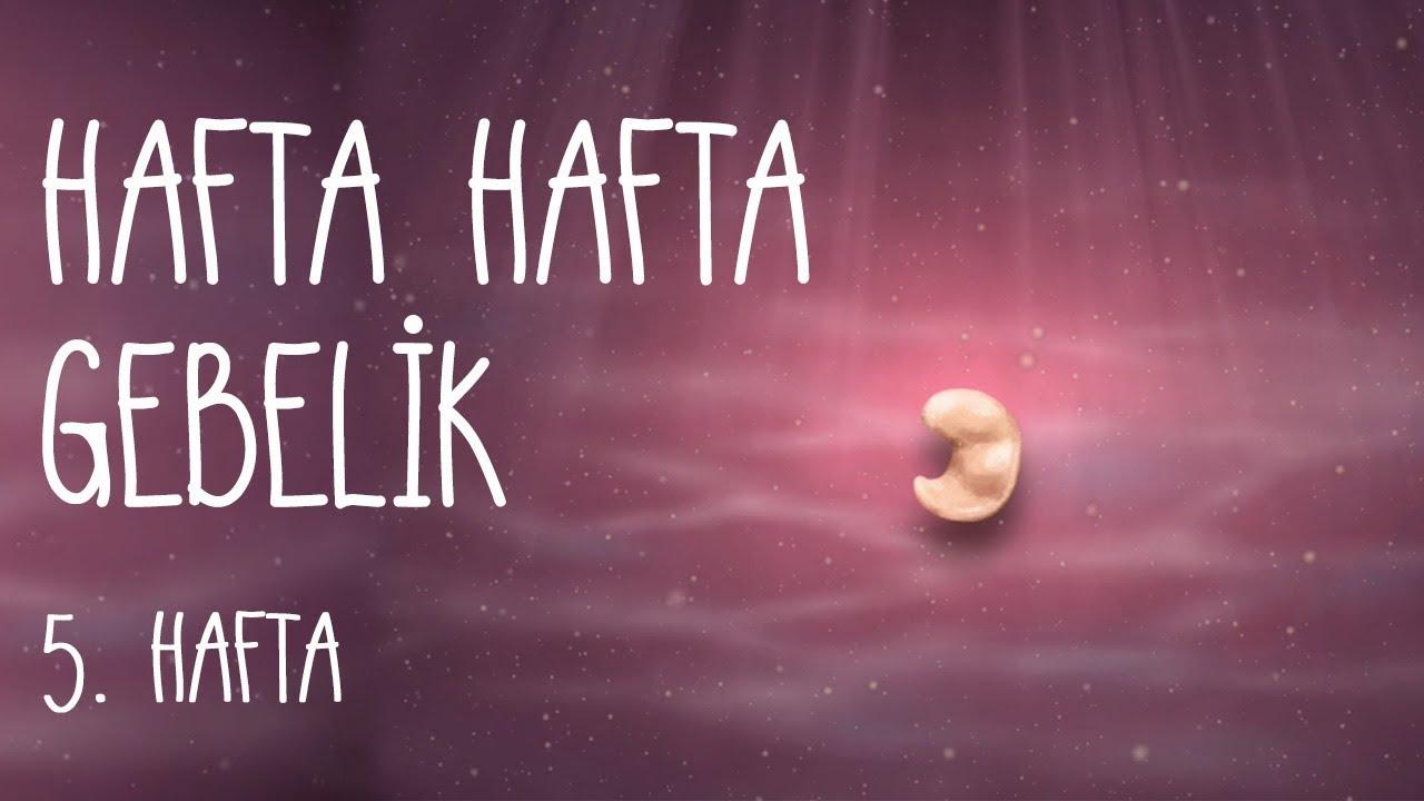 Download Hafta Hafta Gebelik  5. hafta