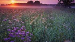 'Костры горят далёкие'. Поёт Валерий Сёмин