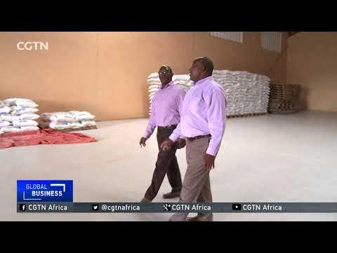 Ugandan farmers struggling to sell off surplus maize