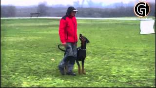 Gotti Van Het Wantij - Obedience Training (2013)