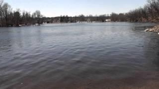 Atlantic Salmon in the Penobscot River