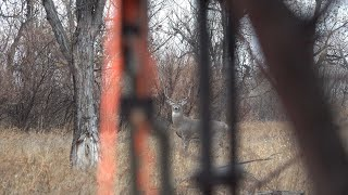 Buck Down! Hunting Whitetails From The Ground Pt 1