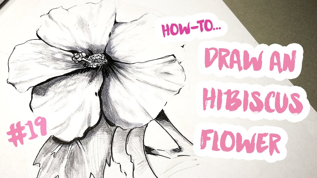 How to draw an hibiscus flower a drawing a day 19 youtube how to draw an hibiscus flower a drawing a day 19 izmirmasajfo