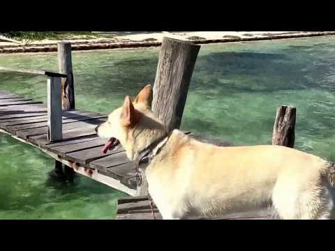 Expat Dogs in Mexico