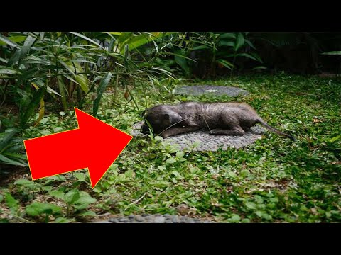 Stray Puppy In Grass Won'T Stand Up – Rescuers Inch Closer, Then Jump Back In Alarm