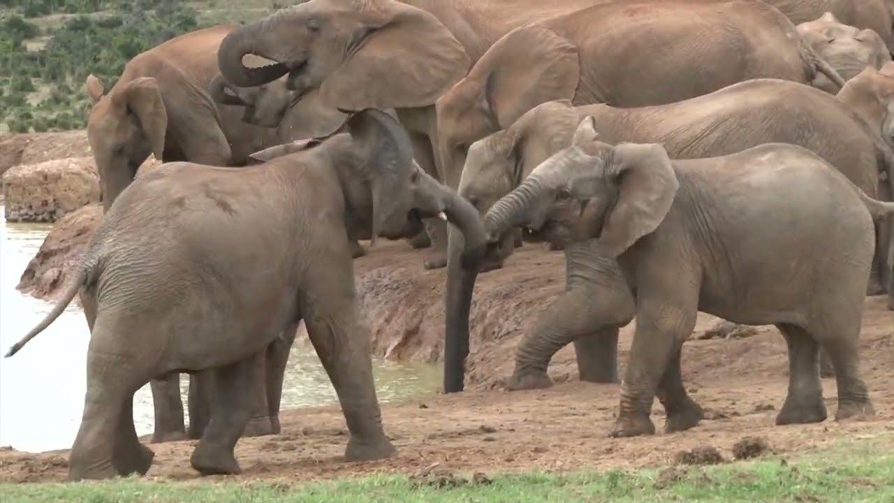 Addo National Park video - (Elephants; Lions; Buffalos; Kudu and many other wildlife)