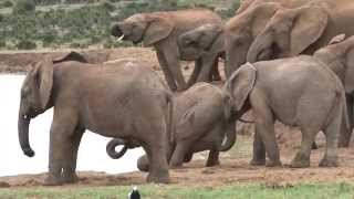 Addo National Park video - Elephants Lions Buffalos Kudu and many other wildlife