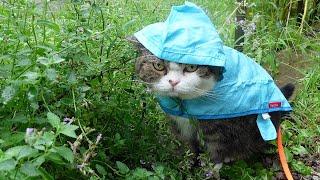 雨の日にカッパを着てお散歩するねこ。Maru takes a walk in a raincoat.