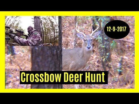 Crossbow Deer Hunt 12-9-2017 (Buck)