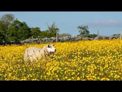 O Waly, Waly - Trad. C17 Scottish Folk Tune (arr. John Rutter)