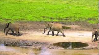 Tosiek Degutis - Adventures of a Little Elephant - Przygody Słonika