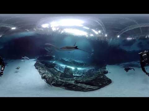 360 Underwater Video from inside Georgia Aquarium's Ocean Voayager Habitat