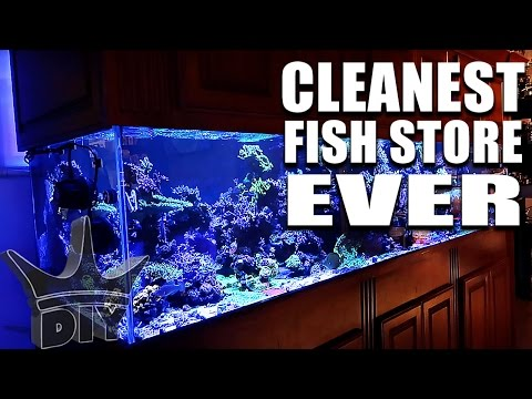 AMAZING aquarium fish store tour!!