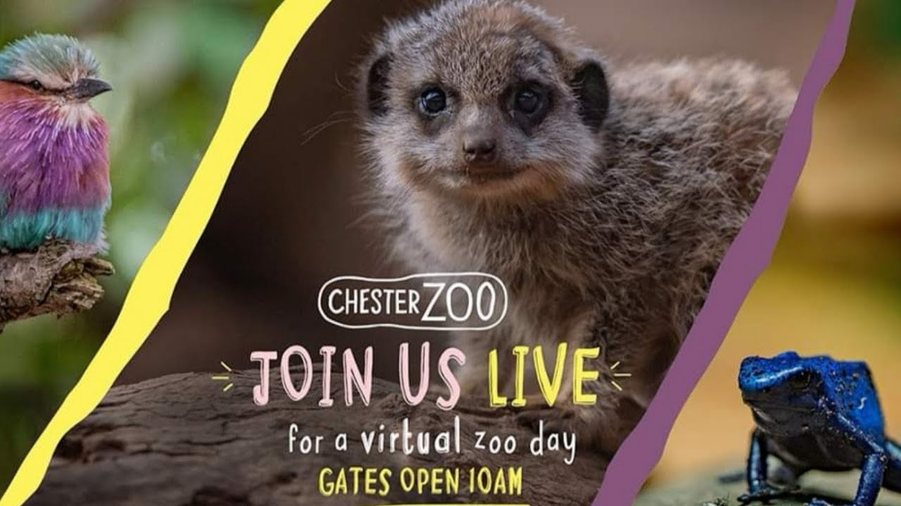 Chester Zoo Live Stream || How To Watch Them - YouTube