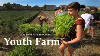 FOOD for Lane County's Youth Farm