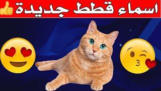 اسماء قطط جميلة جدا 2021|اسماء قطط ذكور واناث جديدة