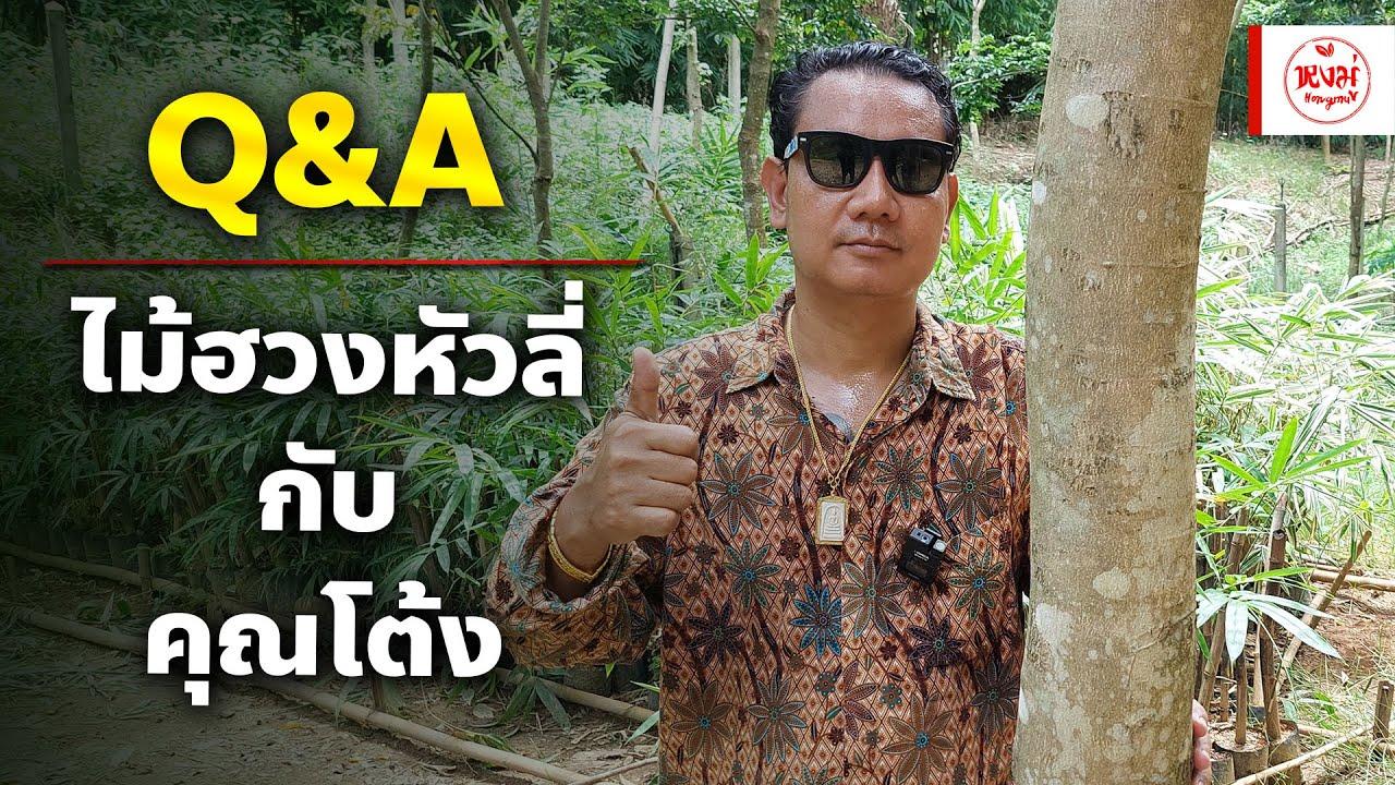 Q&A : ไม้ฮวงหัวลี่ กับ คุณโต้ง