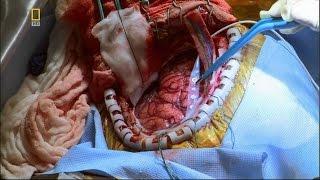 Невероятное тело человека HD