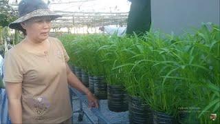 Thiết kế Bình cũ đã bỏ để trồng Rau muống , không làm Ô Nhiễm Môi Trường  | Khoa Hien 321