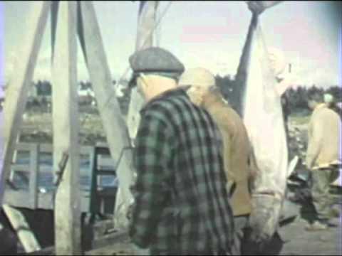 Tuna Fishing in Wedgeport, Nova Scotia (1940s, Pt. 1 of 2)