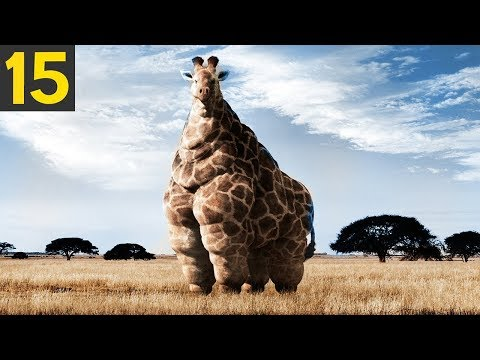 15 FATTEST Animals Ever Seen