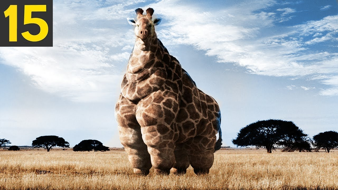 Download 15 FATTEST Animals Ever Seen