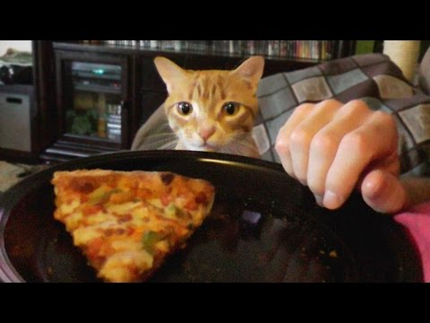 trying-to-eat-with-a-cat-around!