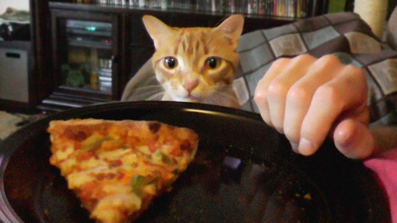 Stop Cat From Trying To Eat My Food