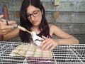 Alimentando os filhotes de calopsita na papinha