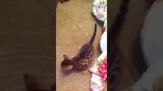 Котята ищут дорогу домой!) 😺😺😺😺читайте описание!)