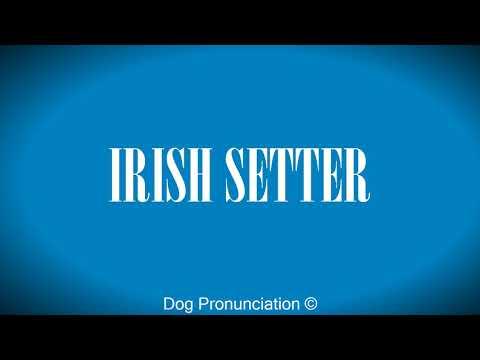 How to pronounce  IRISH SETTER