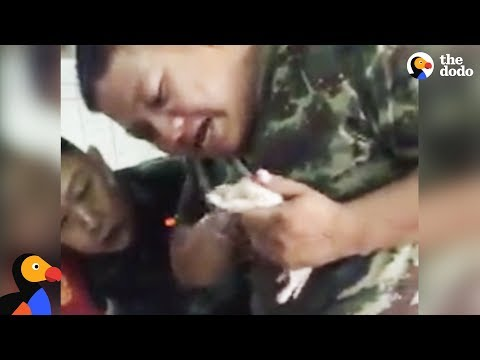 Soldier Gives Drowning Puppy CPR, Then Adopts Him | The Dodo